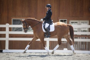 anderson-equine_0011