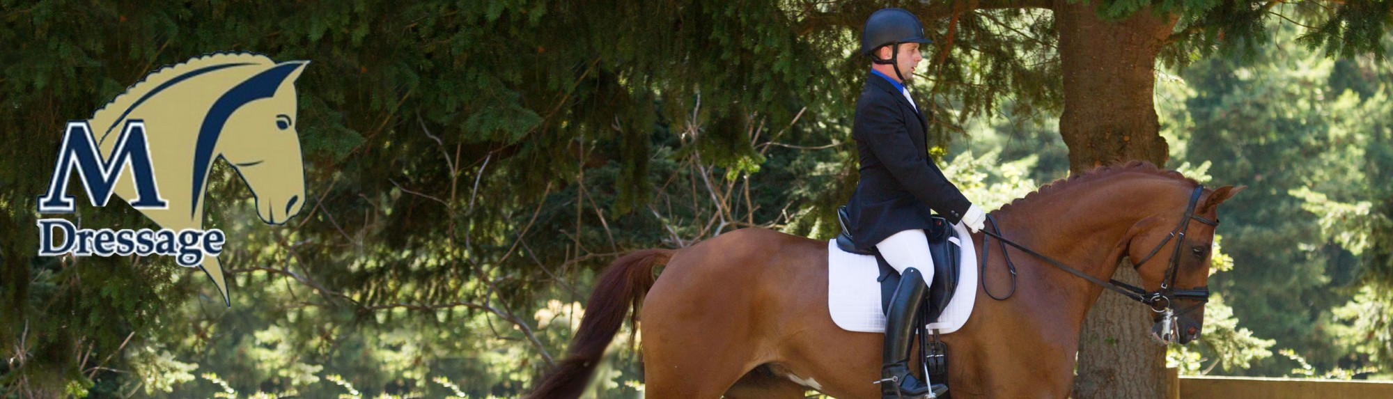 M Dressage | Seattle Dressage Training and Lessons