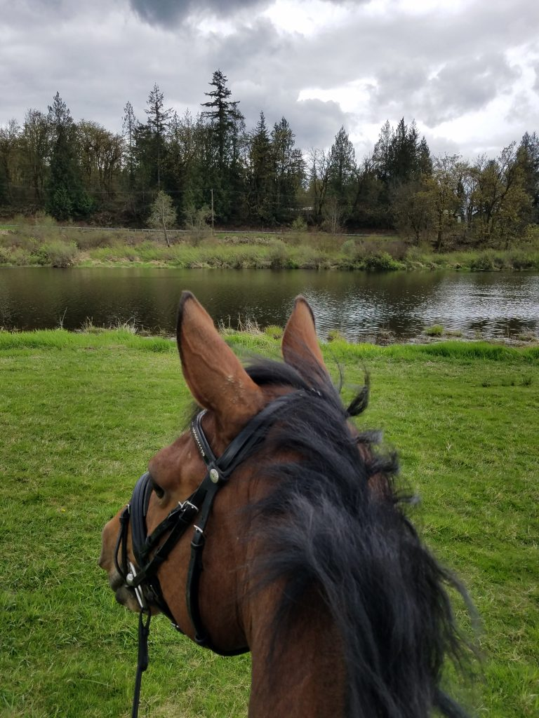 Dressage lessons in Seattle WA