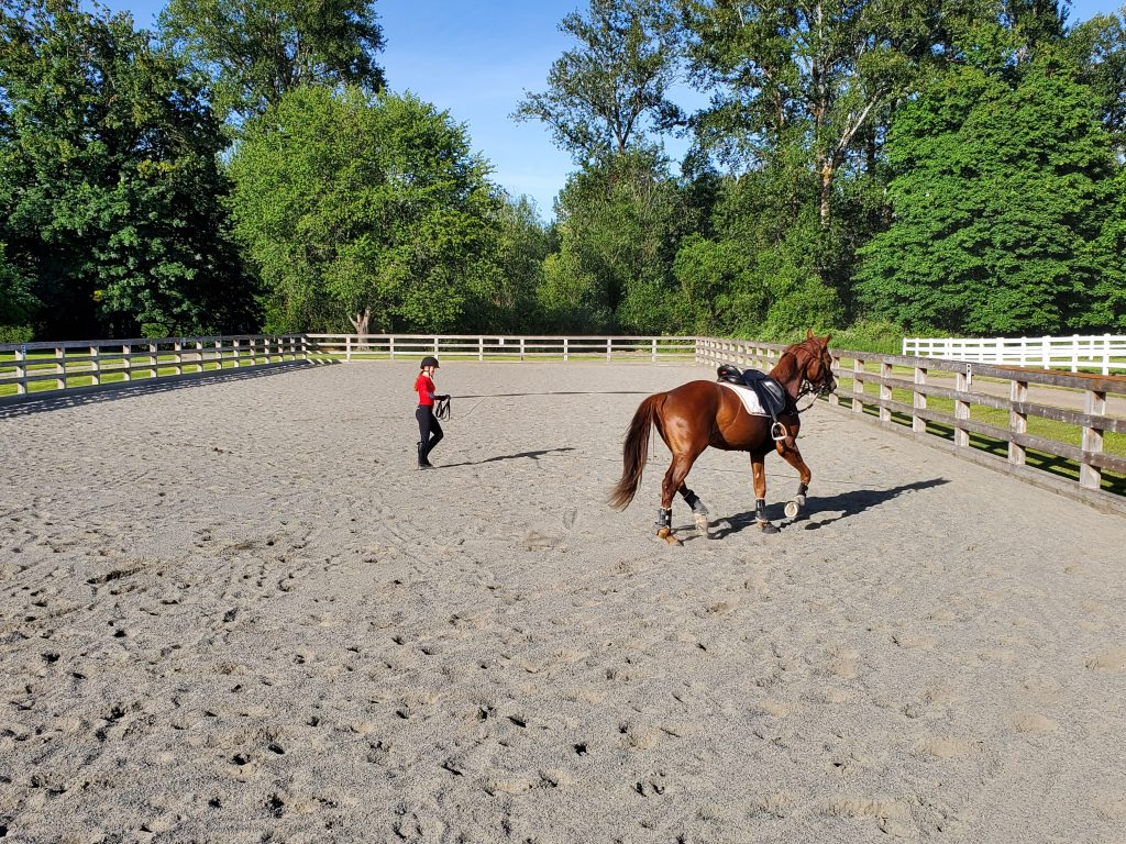 dressage training and lessons seattle wa