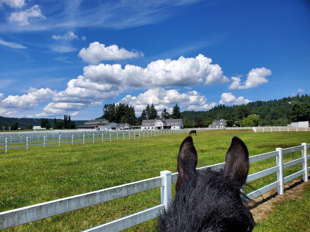 Riding Lessons in Redmond WA