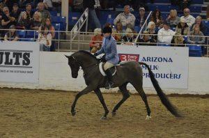 arab horse for sale washington state