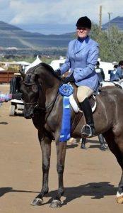 arabian horses for sale black tie affair