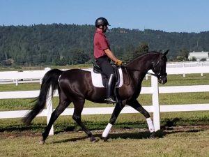 redmond wa arabian horses for sale
